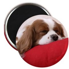 "SLEEPING SPANIEL PUPPY 2.25"" Magnet (10 pack)"