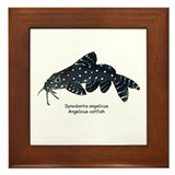 Synondontis angelicus Framed Tile