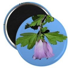 "Rose of Sharon on Blue 2.25"" Magnet (100 pack)"