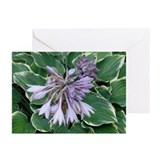 Hosta Greeting Cards (Pk of 10)