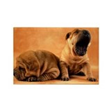 SHAR PEI PUPPIES Rectangle Magnet