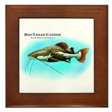 Red-Tailed Catfish Framed Tile
