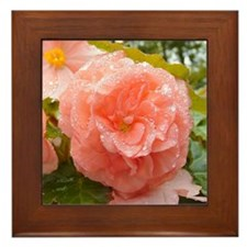 Begonia Framed Tile