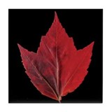 Fall Maple Leaf Tile Coaster