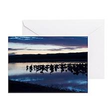 Sandhill Cranes at Bosque del Greeting Cards (Pk o