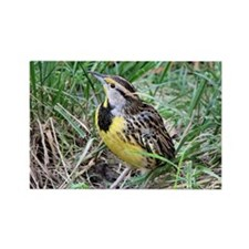 Meadowlark Rectangle Magnet