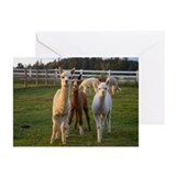 Cute Alpacas Greeting Cards (Pk of 20)