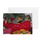 Squirrels Greeting Cards