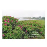 WILD ROSE Postcards (Package of 8)