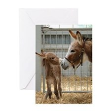 Greeting Card - Newborn Donkey Foal