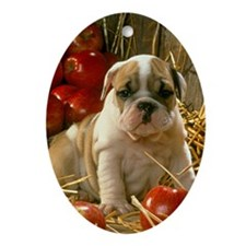 BULLDOG APPLES PUPPY Ornament (Oval)