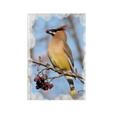 Cedar Waxwing Rectangle Magnet