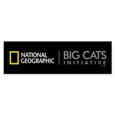 Big Cats Initiative Bumper Sticker