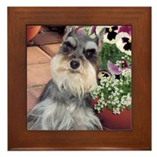 Schnauzer and the Pansies Framed Tile