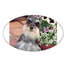 Schnauzer and the Pansies Oval Decal
