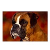 BOXER PROFILE Postcards (Package of 8)