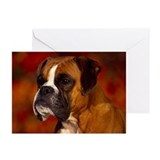 BOXER PROFILE Greeting Cards (Pk of 10)