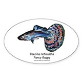Fancy Guppy Oval Decal