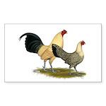 OE Bantams Cream Buttercup Sticker (Rectangle 50 p