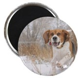 "Cute Animal 2.25"" Magnet (100 pack)"