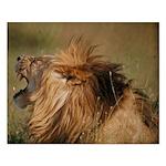 Lion Roar Small Poster