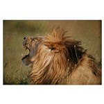 Lion Roar Large Poster