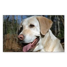 Funny Yellow labrador Decal