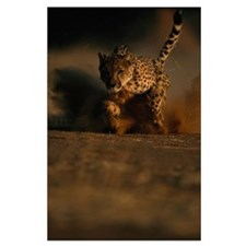 Chewbaaka the Cheetah Large Poster