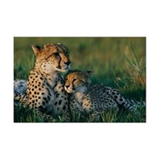 Female Cheetah and her Cub Mini Poster Print