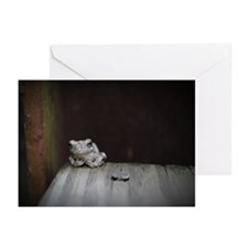 Frog Greeting Cards (Pk of 10)