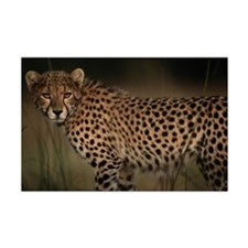 Cheetah in the Grass Mini Poster Print