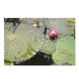 Lily Pad Pond Postcards (Package of 8)
