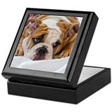 English Bulldog Puppy Keepsake Box