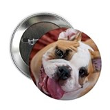 "English Bulldog Puppy 2.25"" Button"