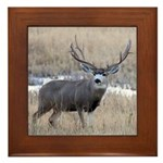 Muley Buck Framed Tile