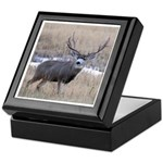 Muley Buck Keepsake Box