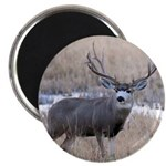 Muley Buck Magnet