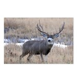 Muley Buck Postcards (Package of 8)