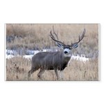 Muley Buck Sticker (Rectangle)