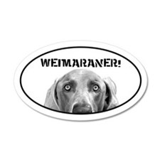 Weimaraner In A Box! 20x12 Oval Wall Peel