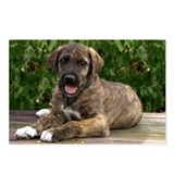 Irish Wolfhound Puppy Postcards (Package of 8)