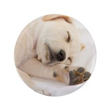"Labrador Puppy 3.5"" Button (100 pack)"