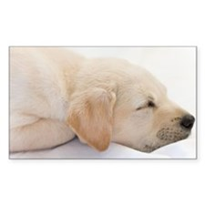 Labrador Puppy Dog Decal