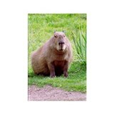 Capybara Looking Forward Rectangle Magnet