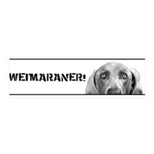 Weimaraner In A Box! 36x11 Wall Peel