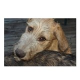 8 Charismatic Irish wolfhound puppy Postcards