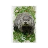 Groundhog eating Rectangle Magnet