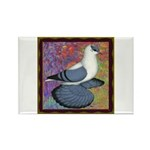 Swallow Pigeon Framed Rectangle Magnet (10 pack)