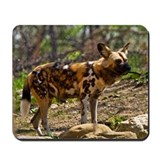 African Wild Dog 1932 Mousepad