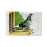 Racing Homer Pigeon Rectangle Magnet
